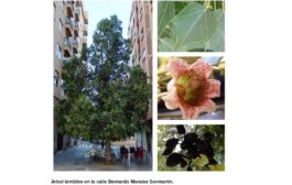 Árboles de Malilla | ÁRBOL TEMBLÓN